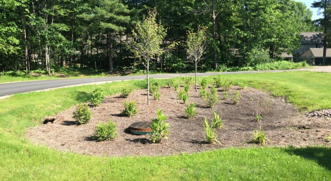 Fully planted Bioretention Facility, complete with Red Maples, Redosier Dogwoods, Winterberry, Cardinal Flowers, Blue Flags, and Cutleaf Coneflowers.